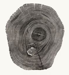 5   Beautiful Photos Of Tree Rings Remind Us To Slow Down A Little   Co.Exist: World changing ideas and innovation