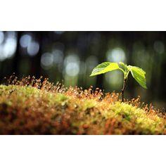 フリー写真, 植物, 新芽