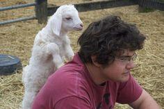 "Inquisitive little goat ""kid"" -- Blanca -- at Juniper Moon Farm!  Cute!"