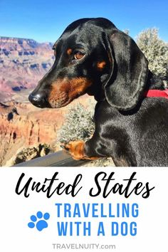 Everything you need to know about travelling in the USA with your dog: from transport to hiring cars, from dog-friendly hotels to dining out.