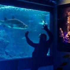 #cretaquarium #cretaquarium10years @Cretaquarium  @CreteRegion #myhersonissos #Greeksummer @VisitGreecegr #DiscoverGRcom #lovingreece  #menoumellada #cretaquarium  @heraklion_info_point  #aquarium #sea #marine #underwater #marinelife #research #fish  #science #mygreeksummer #explore #discovery #kids #fun #crete #myhersonissos #wildlife #photography #biology #geology #visit #nature #shark #medousa  #shark #share  #marine Wildlife Photography, Photography Tips, Travel Photography, Heraklion, Kids Fun, Crete, Marine Life, Geology, Family Travel