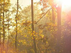 Centi bastelt: Licht wie Honig