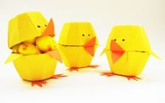 chicks.jpg 428×270 pixel