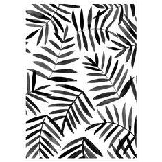 Image of Black Palm
