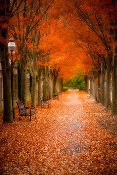 ~~Autumn Path | Princeton, New Jersey | by yuko kudos~~