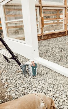 DIY Greenhouse Using old windows, building a greenhouse, how we built our vintage window greenhouse Old Window Greenhouse, Build A Greenhouse, Vintage Windows, Old Windows, Garden Ideas Along Fence Line, Farm Lifestyle, Garden Doors, Farms Living, Recycled Glass