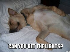 11 Things Only Night (H)owl Pup Parents Understand