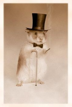Hamster wearing top hat