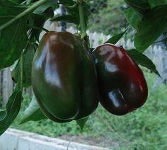 Preparing your vegetable garden for planting