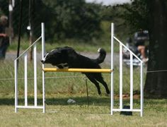 Dog Agility Course Maps