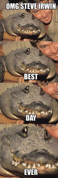 We compile the great collection of Top 30 steve irwin memes. Steve Irwin memes are viral right now on social media and internet. Funny Animal Jokes, Funny Animal Pictures, Cute Funny Animals, Animal Memes, Funny Cute, Funny Photos, Funny Images, Super Funny, Steve Irwin