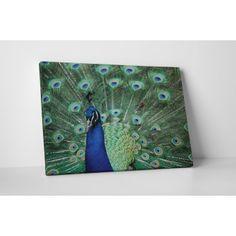 Kéknyakú páva : Állatok - KaticaMatrica.hu - A minőségi falmatrica és faltetoválás webáruház Peacock, Marvel, Bird, Animals, Peacock Bird, Animais, Animales, Animaux, Marvel Marvel