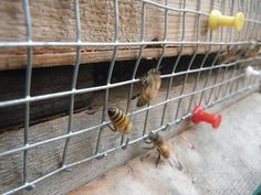 Hardware cloth to keep mice out of a beehive