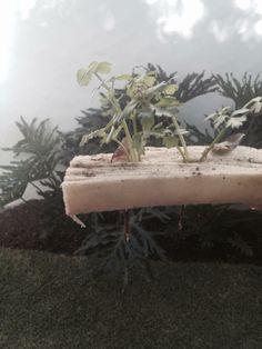 las plantas vivas de hidroponia