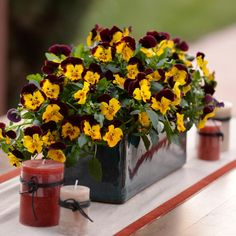 Discover fall container garden recipes filled with plants like pansies, kale, and ornamental grasses, from the experts at HGTV Gardens. Easy Garden, Garden Pots, Garden Ideas, Planter Garden, Herb Garden, Garden Inspiration, All Flowers, Large Flowers, Exotic Flowers