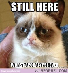 b for bel: Grumpy Cat and the Almost-Apocalypse