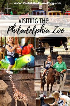 Tips for what to see and do at the Philadelphia Zoo - Pictures from our visit to the zoo where you can see all kinds of big cats - lions, tigers, bears, giraffes, hippos, and many other animals. Best zoo in Pennsylvania.