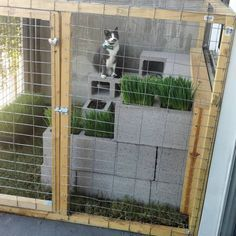 Cat Care Lovin the single life on the catio Crazy Cat Lady, Crazy Cats, Outdoor Cat Enclosure, Reptile Enclosure, Cat Run, Cat Whisperer, F2 Savannah Cat, Vash, Outdoor Cats