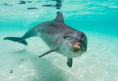Los delfines, personas no humanas