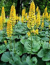Valtikkanauhus Fall Flowers, Yard, Garden Ideas, Plants, Autumn, Tips, Autumn Flowers, Patio, Fall Season