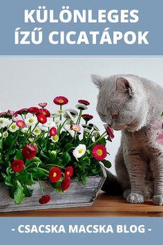 Macskaeledel | Cicaeledel | Macskatáp | Macskaeledel | Macska | Macska képek | Macskák és kiscicák | Macskák vicces | Macskák cuki | Cicák | Cicák cuki | Cicák vicces | Macskás idézetek | Macskás viccek | Macskás képek | Cicás képek | Macska idézetek | Macska idézet | Macska illusztráció | Idézetek macska | Macskás idézetek | Vicces macskás idézetek | Cica idézet | Cica idezetek | Cicás idézetek magyarul | Kismacska | Cuki kismacskák | Kiscica | Kiscicák | Kiscicás képek Izu, Teddy Bear, Marvel, Toys, Blog, Animals, Animais, Animales, Animaux
