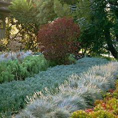 Water-wise garden design guide | Idea to steal: Grow in rows | Sunset.com