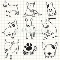 Arte vetorial : Bull terrier dog