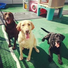 Premier Dog Boarding & Training Serving Marin, Sonoma, Napa & the SF Bay Area. Dairydell's Dog Training Center specializes in dog training for women. Labradors, Dog Boarding, The Ranch, Marines, Dog Training, Dog Lovers, Labrador Retriever, Friends, Dogs