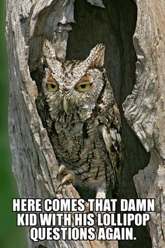 Hungover Owl | here comes that damn kid with his lollipop questions again. - WeKnowMemes