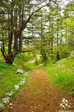 Image result for tannourine cedar forest reserve