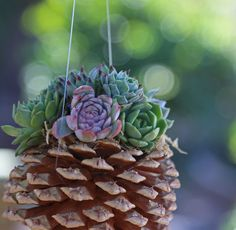 Hanging Pine cone succulent planter side horiz