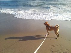 Jupiter's famous beach is dog friendly so brings the furry member of the family when you hit the beach.