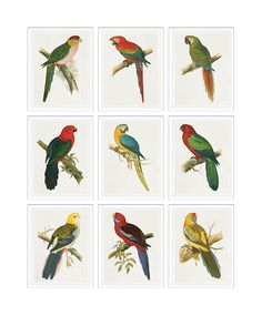 TROWBRIDGE - Green's Parrots Nine Piece - in Contemporary silver with linen slip (Frame Code: 624L)