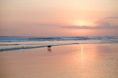 Dog on Kuta Beach | Luxury Travels | Luxury Travel Blog