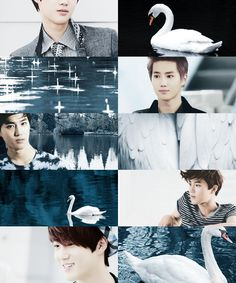 If EXO were animals: Suho = swan