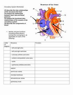 Circulatory System Worksheet Pdf Circulatory System Diagram for Kids Science Worksheets, Science Activities, Science Chart, Kids Worksheets, Motor Activities, Printable Worksheets, Middle School Science, Science For Kids, Life Science