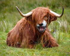 41 Animal Hybrid Photoshop Creations Will Blow Your Mind -  #creepy #hybrid #photoshop #weird