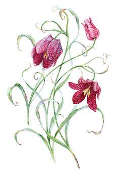 Botanica on Behance
