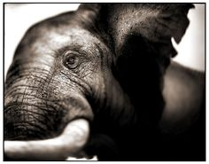 nick brandt photography - Google Search