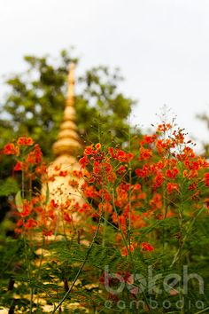 Chedi and flowers | Kandal Province, Cambodia