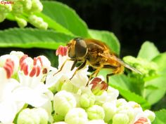 Ophelia lernt schwimmen....und fliegt: Genau hingeschaut! Fruit, Plants, Swimming, Nature, Plant, Planets