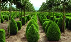 Water-Wise Plants and Design for Earth Day - Gallery - Garden Design Article On Water, Buxus Sempervirens, Drought Resistant Plants, Plant Information, Diy Projects For Beginners, Modern Garden Design, Garden Shrubs, Water Wise, Garden Guide