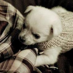 List of free dog sweater crochet patterns.