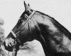 Everyone, meet Grog. 1933 son of Hard Tack, out of Exhilarate A mildly successful claimer, Grog was purchased by Charles Howard to be used as a body double for his half-brother, Seabiscuit. Trainer Tom Smith would often send Grog out in place of Seabiscuit for workouts to fool reporters and rail birds