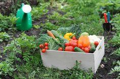 7 consejos para crear un exitoso huerto orgánico