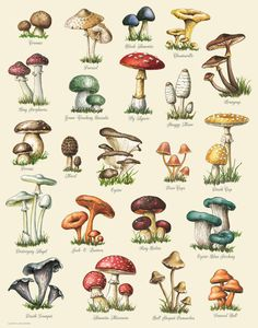 Butterfly Discover Autumn Leaves Print Leaf Varieties Types of Leaves Seeds Fall Colors Harvest Leaf Chart Thanksgiving Halloween October Hostess Mushroom Drawing, Mushroom Art, Mushroom Food, Mushroom Hunting, Mushroom House, Botanical Drawings, Botanical Prints, Impressions Botaniques, Art Deco Posters