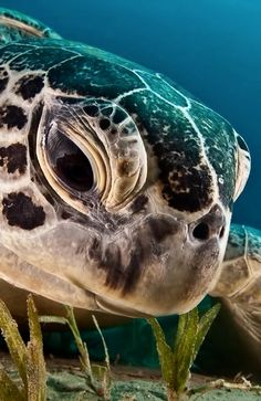 turtle. sweet eyes :)