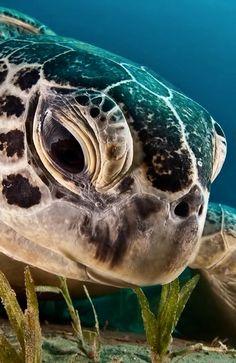 turtle. sweet eyes :)