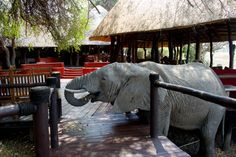 An Elephant in the camp...
