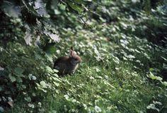 bunny in amsterdam